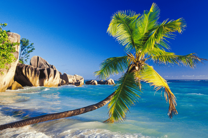 La Digue Island Palm Swim